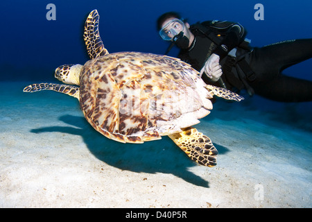 Diver and Turtle - Stock Photo