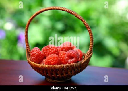 Korb mit roten Himbeeren im Sommergarten - Stockfoto