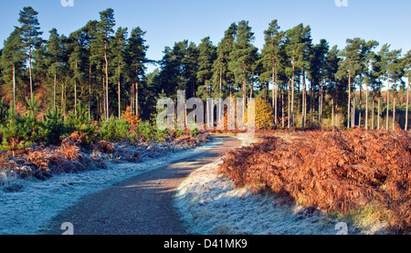 Stunning autumnal hues tints and colour from woodlands and forests on Cannock Chase Area of Oustanding Natural Beauty - Stock Photo