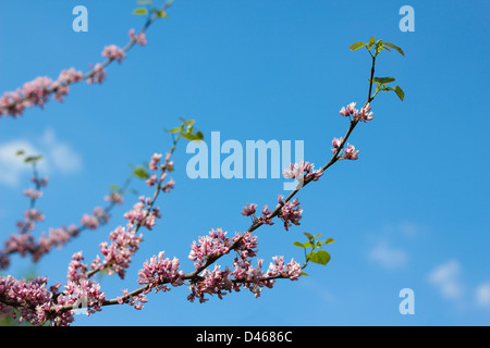 branch with flowers of peach tree in spring on sky background - Stock Photo