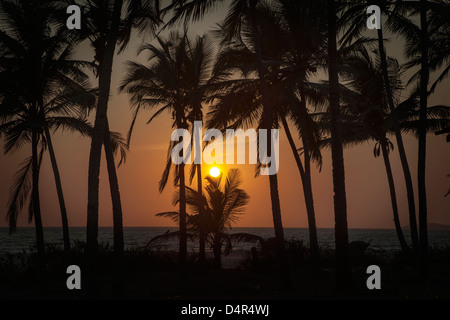 Sunset at Arossim Beach, Southern Goa, India. Palm trees silhouetted. - Stock Photo