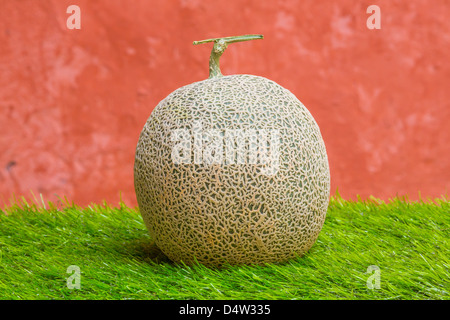 Japanese rock melon on green grass and grunge wall - Stock Photo
