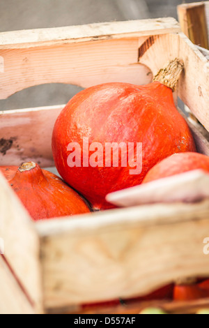 Close up of pumpkins in crate - Stock Photo