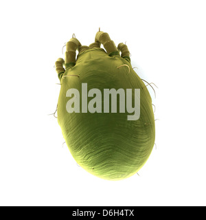 Dust mite, artwork - Stock Photo