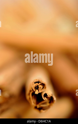 Cinnamon spice sticks - Stock Photo
