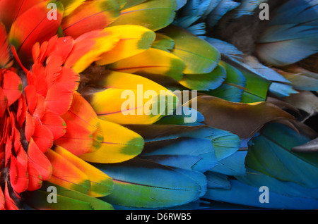 Colorful plumage of a Macaw in the Amazon rainforest - Stock Photo