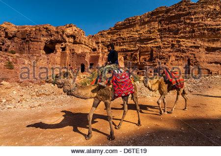 Camels, Petra Archaeological Park, Petra, Jordan. - Stock Photo