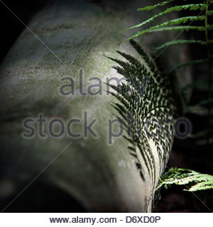 A fern casts its shadow on a tree trunk in forest Bavarian Forest, Munich, Germany - Stock Photo