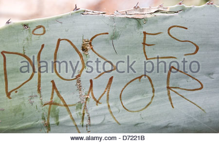 Graffiti street art 'Dios es Amor' 'God is Love' on cactus plant Granada Andalusia Spain Europe - Stock Photo