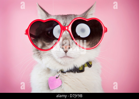 Valentine cat posing with red love sunglasses against pink  background - Stock Photo