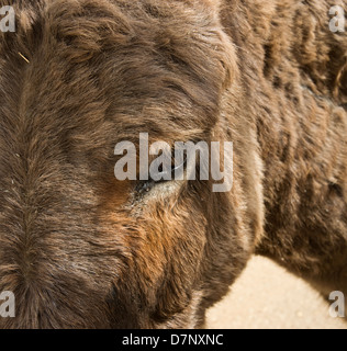 A close up head shot of a donkey. - Stock Photo