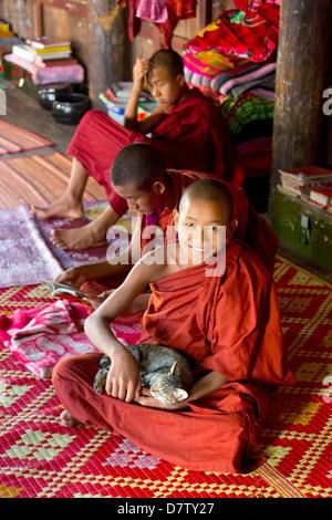 Buddhist monk playing with a cat at Shwe Yaunghwe Kyaung, a famous teak monastery, Nyaungshwe, Inle Lake, Shan State, - Stock Photo