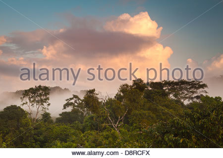 Lowland rainforest at dawn in Soberania national park, Republic of Panama. - Stock Photo