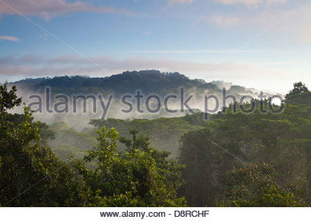 Misty landscape at dawn in Soberania national park, Republic of Panama. - Stockfoto