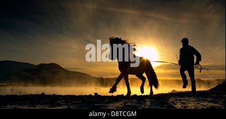 Icelandic Horse, Blue Lagoon, Iceland - Stock Photo