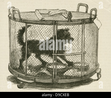 Cage containing inoculated used by Louis Pasteur (1822-1895) during his work on Hydrophobia (Rabies)  at the Ecole - Stockfoto
