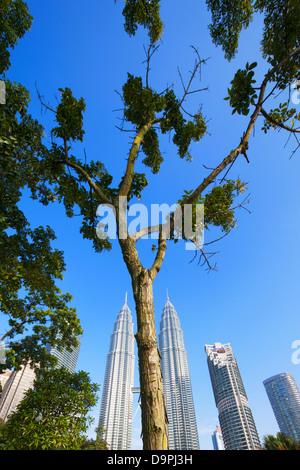 Tree in KLCC park and Petronas Twin Towers, Kuala Lumpur, Malaysia - Stock Photo