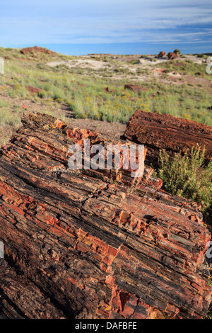 USA, Arizona, Holbrook, Petrified Forest National Park, Petrified wood on Giant Logs Trail - Stock Photo