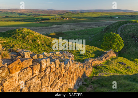 Hadrian's Wall looking west towards Sycamore Gap on a summer's evening, Northumberland, England - Stock Photo