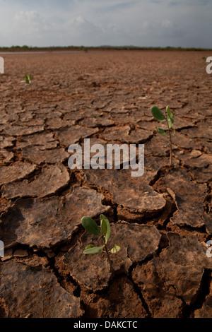 Desert landscape in Sarigua National Park, Herrera province, Republic of Panama. - Stock Photo