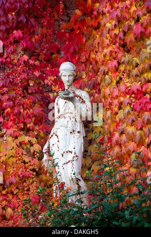 Boston ivy, Japanese creeper (Parthenocissus tricuspidata), female sculpture in autumn before Boston ivy, Germany - Stock Photo