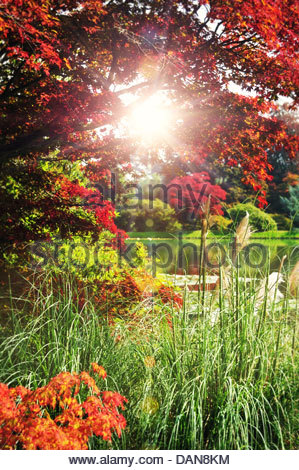 sunny environment - Stock Photo