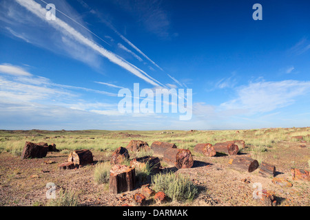 USA, Arizona, Holbrook, Petrified Forest National Park, Petrified wood on Long Logs Trail - Stock Photo