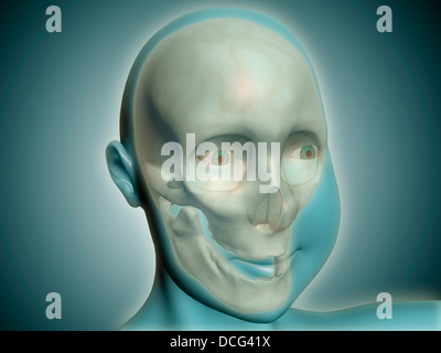 Close-up view of human skull with x-ray body. - Stock Photo