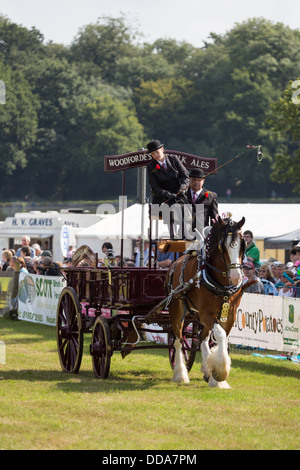 A traditional ale cart and shire horse performing at a county show in England - Stock Photo