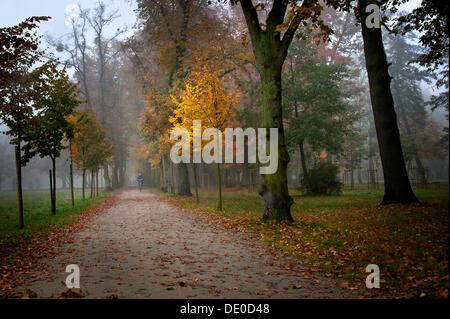 Misty afternoon in the park - Stock Photo
