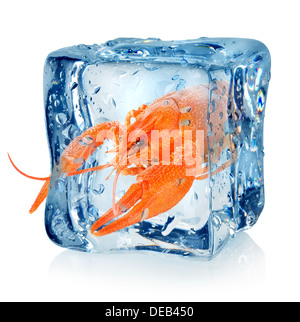 Crawfish in ice cube isolated on a white background - Stock Photo