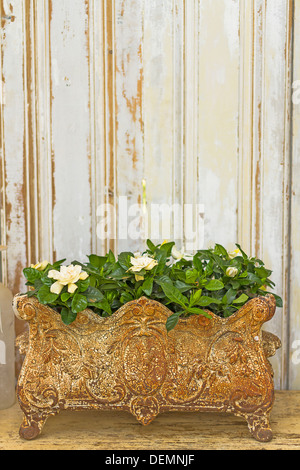 Rustic flower pot with bed of roses - Stock Photo