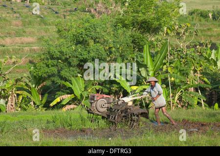 Rice farmer working in rice terraces, Ubud, Bali, Indonesia - Stock Photo