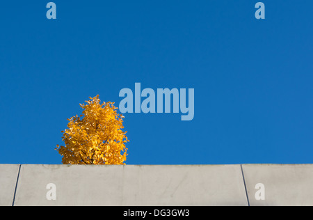 Yellow tree against blue sky on top of a parking garage in Vallingby, 1950s suburb of Stockholm, Sweden. - Stock Photo