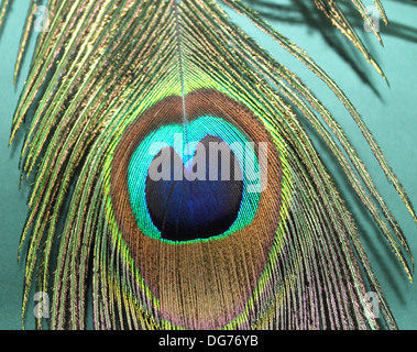 Peacock Feather with focusing on eye of the feather - Stock Photo
