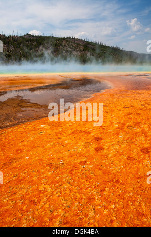 Colorful bacteria mat surrounding Grand Prismatic Spring, Midway Geyser Basin, Yellowstone National Park, Wyoming - Stock Photo