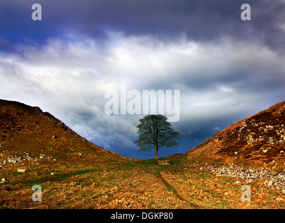 A view of Sycamore Gap in Hadrian's Wall. - Stock Photo