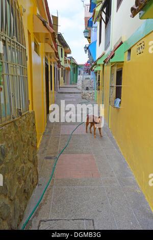 Colourful houses in the Las Penas neighbourhood on Cerro Santa Ana, Guayaquil, Ecuador, South America - Stock Photo