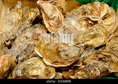 Fresh oysters, chilled with ice, Berlin International Green Week, trade fair, Berlin, Berlin, Germany - Stock Photo