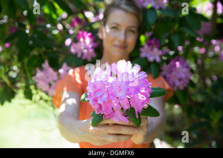 A woman standing in front of a flowering shrub, holding out a large purple hydrangea bloom. - Stock Photo