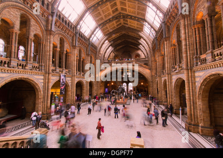 Main Hall of the Natural History Museum London - Stockfoto