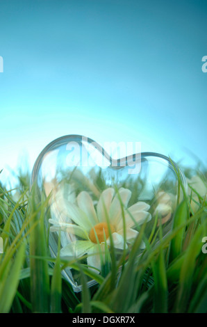 Transparent heart with a flower lying in a meadow - Stock Photo