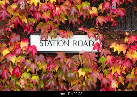 Boston Ivy Vine (parthenocissus tricuspidata) in Autumn colours around road sign. England, UK - Stock Photo