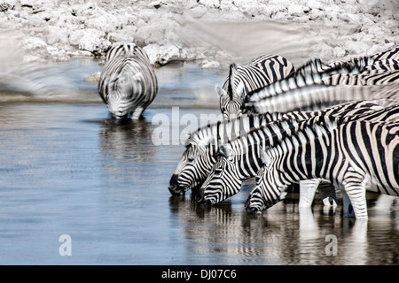 Zebra in Etosha National Park - Stock Photo