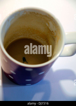 A cup with a dead fly inside - Stock Photo