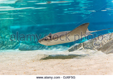 Different images or photos of the underwater or undersea natural paradise - Stock Photo