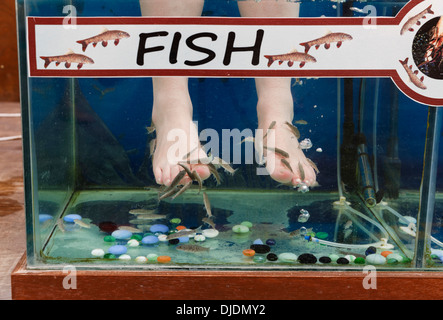 Fish therapy stock photo royalty free image 51878053 alamy for Fish pedicures near me