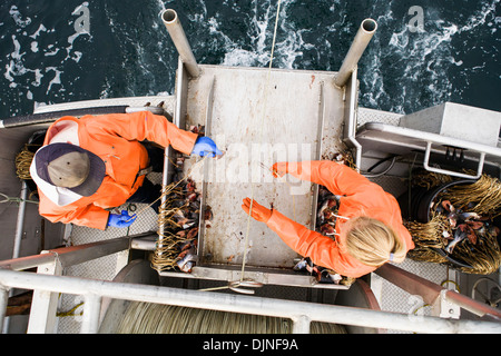 Deckhands Snap Hooks Onto The Groundline While Setting Out Commercial Halibut Longline Gear, Southwest Alaska, Summer. - Stock Photo