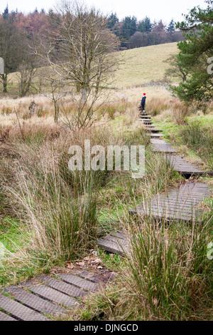 A woman walking on a wooden boardwalk covering a footpath across a marshy field near Bollin Brook Macclesfield Forest - Stock Photo