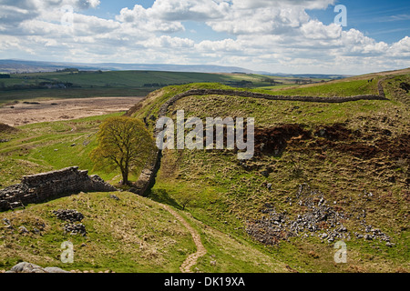 Sycamore Gap part of Hadrian's Wall in Northumberland near the Scottish Borders - Stock Photo